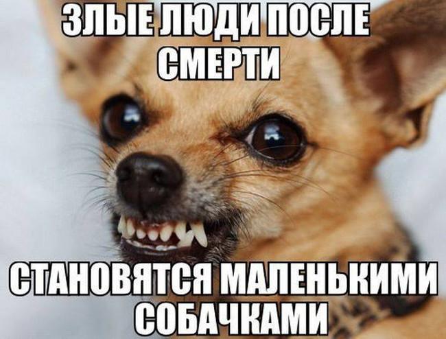 изображение: Злые люди после смерти становятся маленькими собачками #Прикол