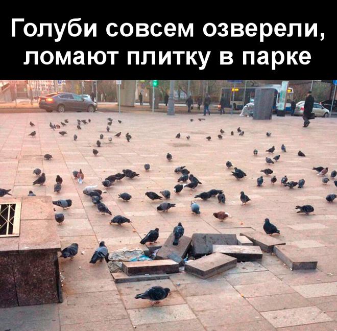 Голуби совсем озверели, ломают плитку в парке | #прикол