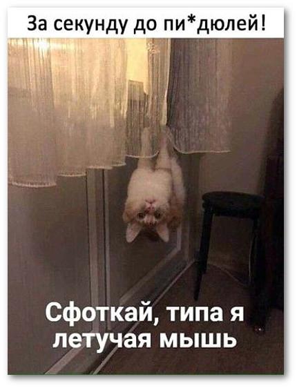 изображение: Кот висит на шторах: - Сфоткай типа я летучая мышь #Котоматрицы