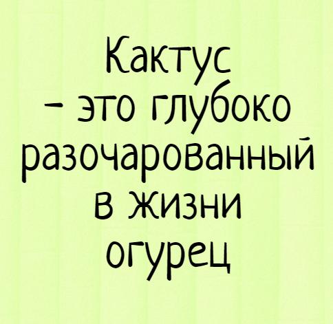 изображение: Кактус - это глубоко разочарованный в жизни огурец #Прикол