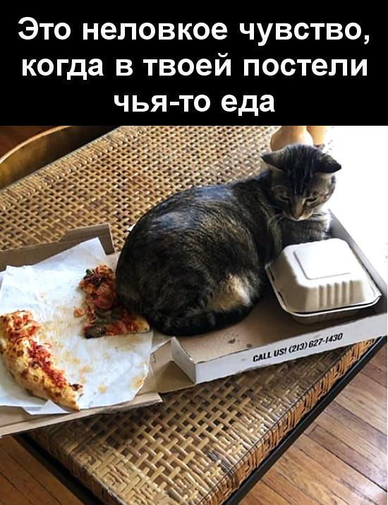 изображение: Это неловкое чувство, когда в твоей постели чья-то еда #Котоматрицы