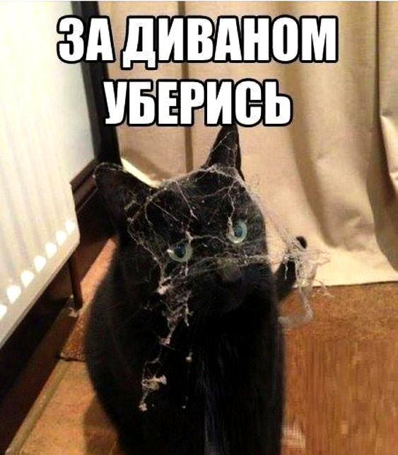 изображение: За диваном уберись #Котоматрицы