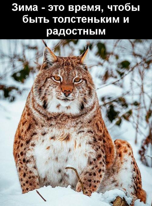 изображение: Зима - это время, чтобы быть толстеньким и радостным #Прикол