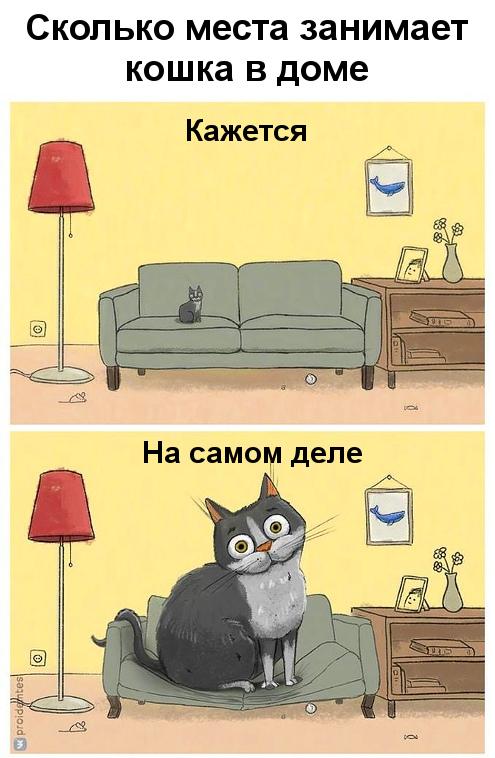 изображение: Сколько места занимает кошка в доме. Кажется. На самом деле. #Прикол