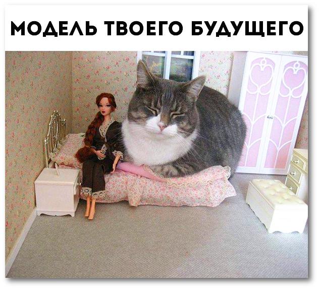 изображение: Модель твоего будущего #Котоматрицы