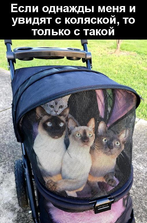 изображение: Если однажды меня и увидят с коляской, то только с такой #Прикол