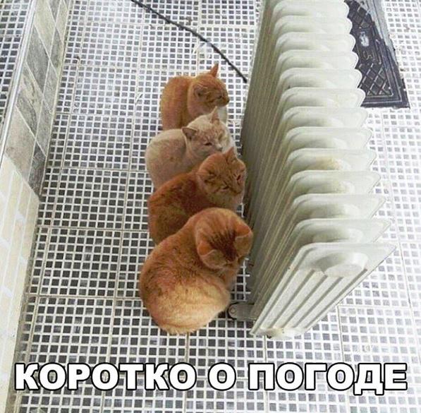 изображение: Коротко о погоде #Котоматрицы