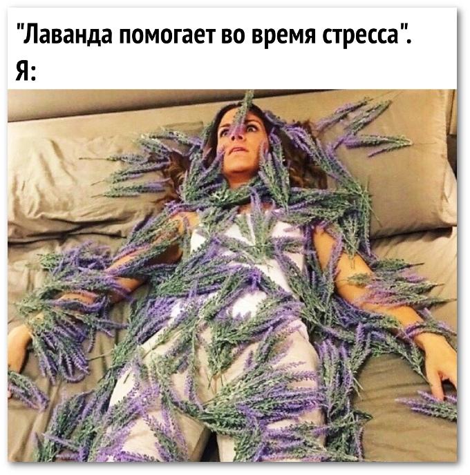 изображение: Лаванда помогает во время стресса. Я #Прикол