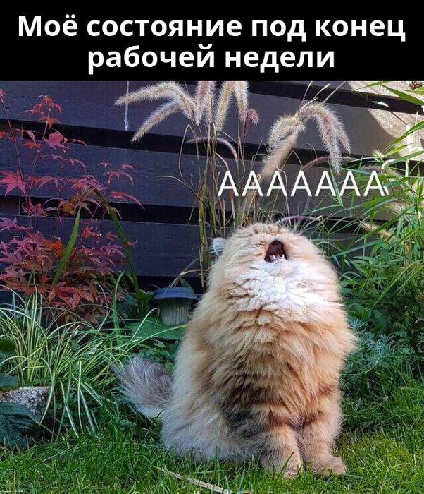 изображение: Моё состояние под конец рабочей недели #Котоматрицы