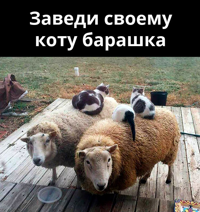изображение: Заведи своему коту барашка #Прикол