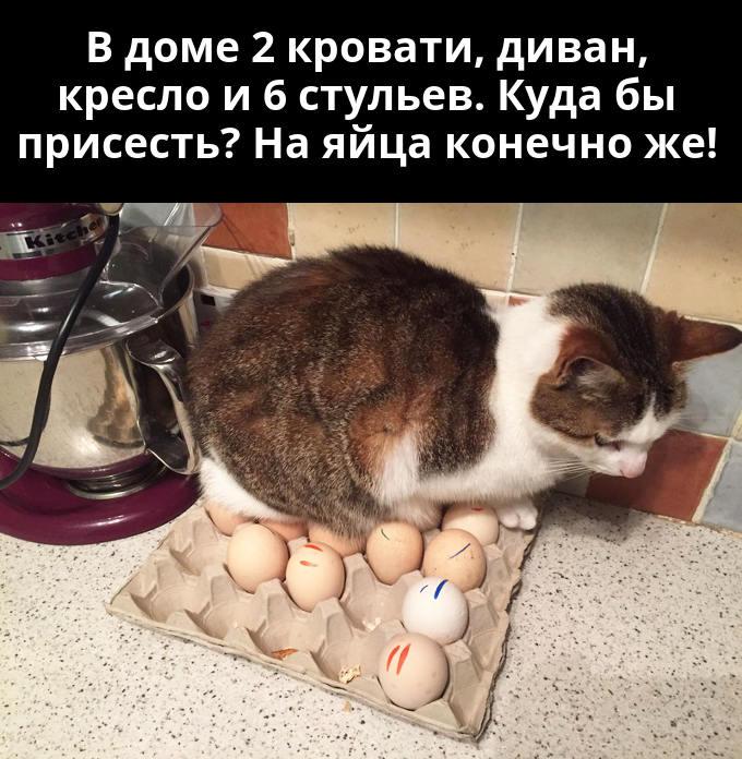 изображение: В доме две кровати, диван, кресло и 6 стульев. Куда бы присесть? На яйца конечно же! #Котоматрицы