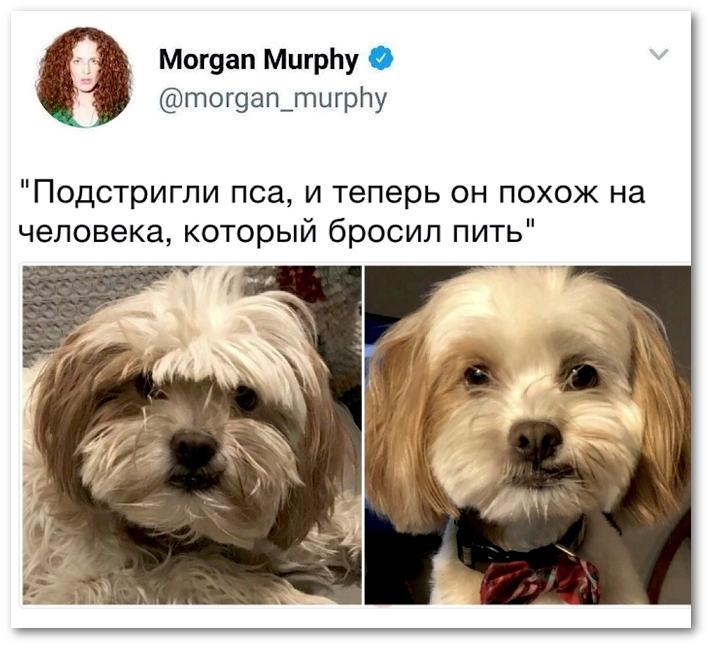 изображение: - Подстригли пса, и теперь он похож на человека, который бросил пить #Прикол