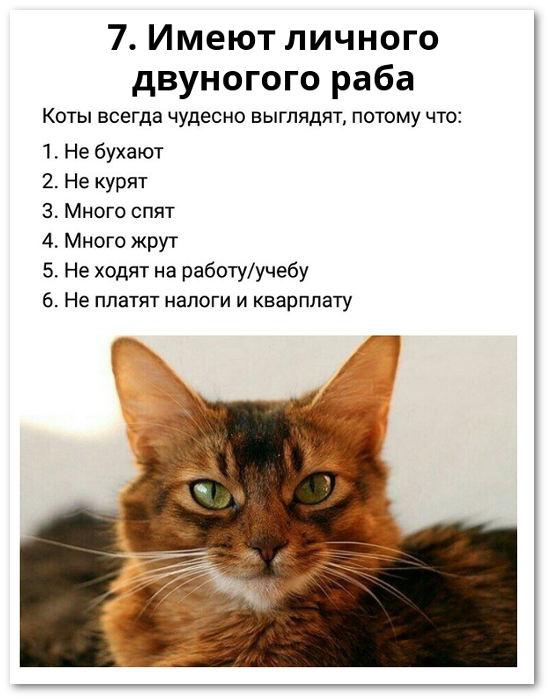 изображение: Коты всегда чудесно выглядят, потому что: 1. Не бухают. 2. Не курят. 3. Много спят. 4. Много жрут. 5. Не ходят на работу/учёбу. 6. Не платят налоги и квартплату. 7. Имеют личного двуногого раба #Прикол