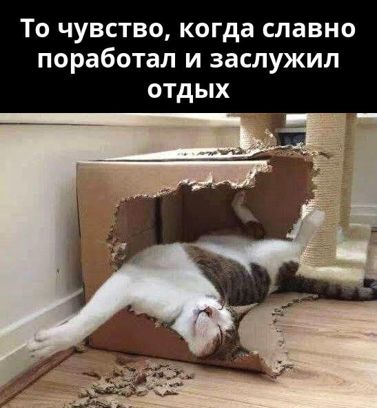 изображение: То чувство, когда славно поработал и заслужил отдых #Котоматрицы