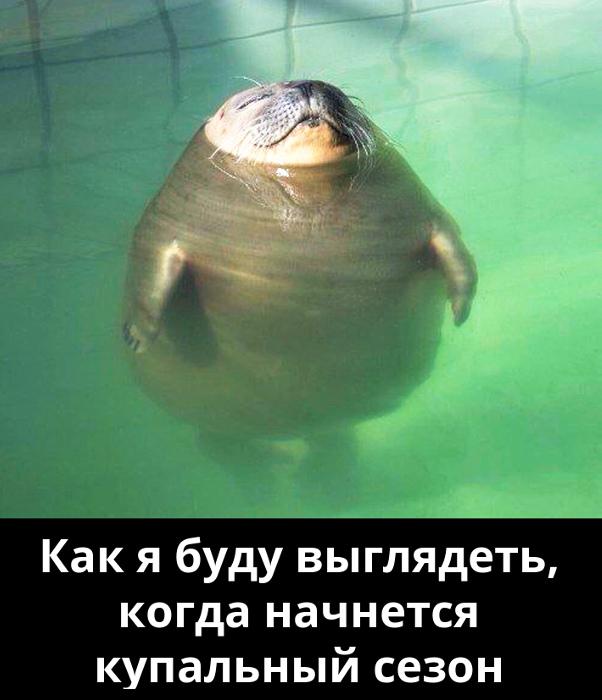 изображение: Как я буду выглядеть, когда начнется купальный сезон #Прикол