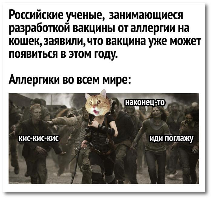 изображение: Российские учёные, занимающиеся разработкой вакцины от аллергии на кошек, заявили, что вакцина уже может появиться в этом году. Аллергики во всём мире: - Кис-кис-кис - Иди, поглажу - Наконец-то #Прикол