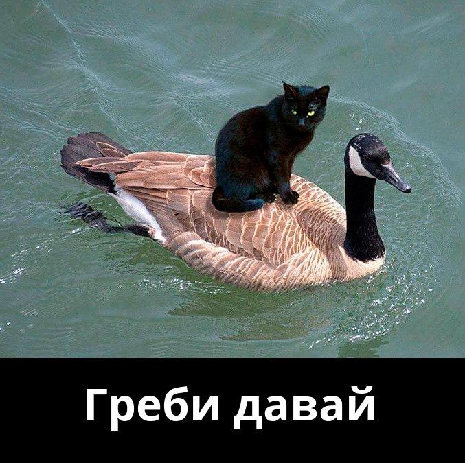 изображение: Греби давай #Котоматрицы