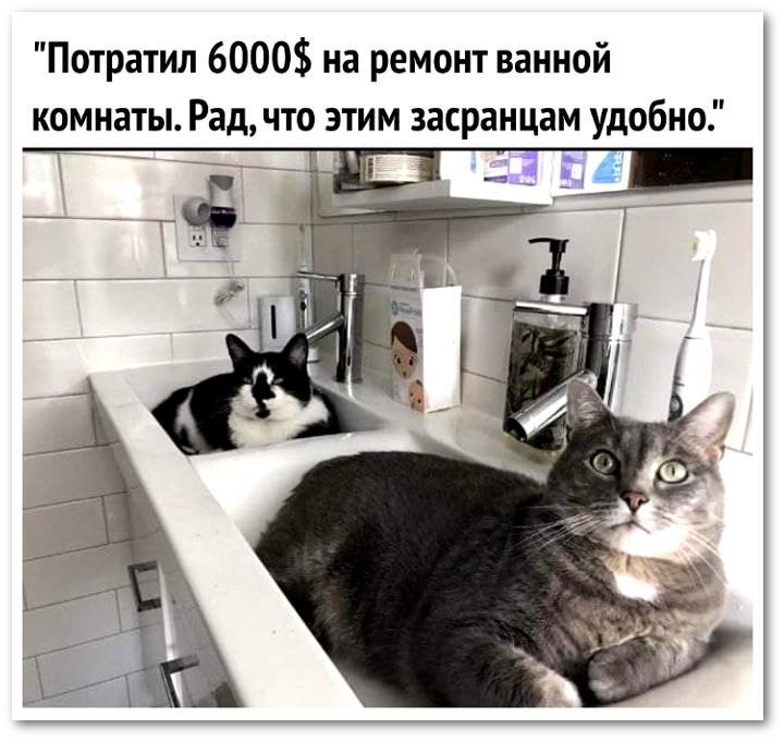 изображение: Потратил $6000 на ремонт ванной. Рад, что этим засранцам теперь удобно. #Котоматрицы