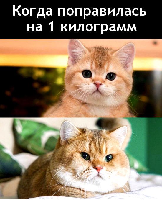 изображение: Когда поправилась на 1 килограмм #Котоматрицы