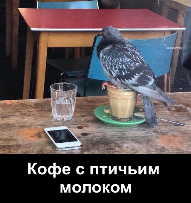 изображение: Кофе с птичьим молоком #Прикол