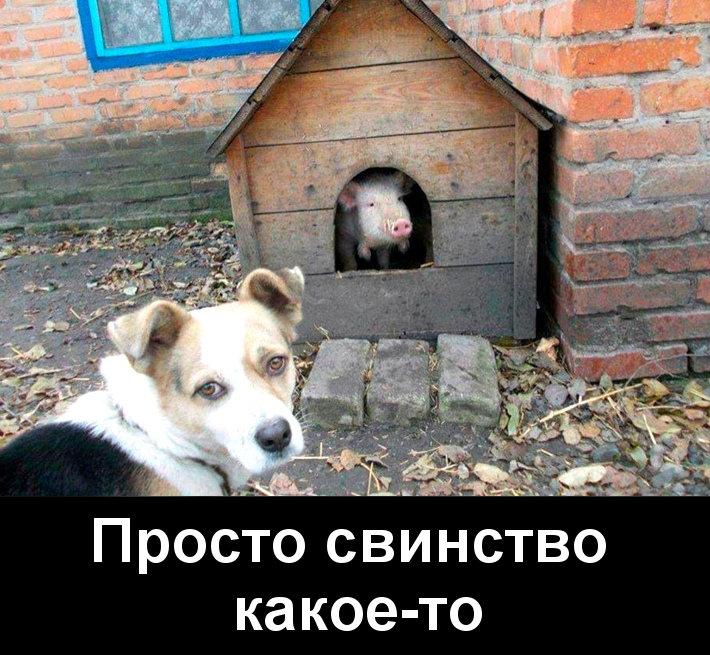 изображение: Просто свинство какое-то #Прикол