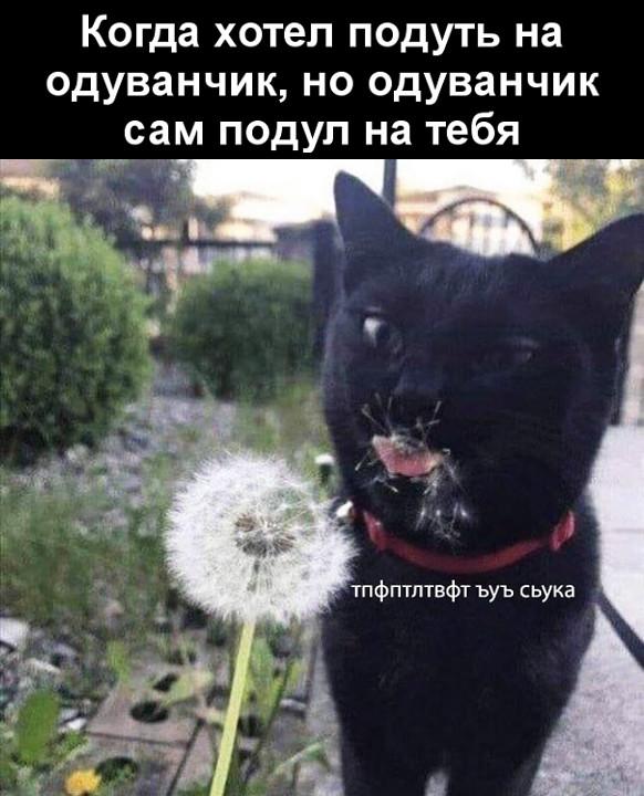 изображение: Когда хотел подуть на одуванчик, но одуванчик сам подул на тебя #Котоматрицы