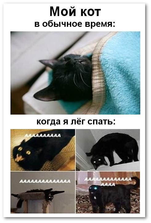 Мой кот в обычное время и когда я лег спать | #прикол