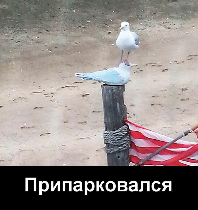 изображение: Припарковался #Прикол
