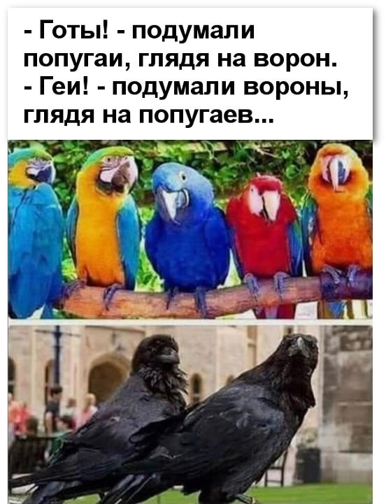 изображение: - Готы! - подумали попугаи, глядя на ворон. #Прикол
