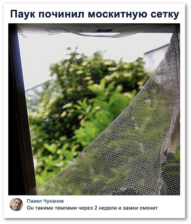 изображение: Паук починил москитную сетку. - Он такими темпами через 2 недели и замки сменит. #Прикол