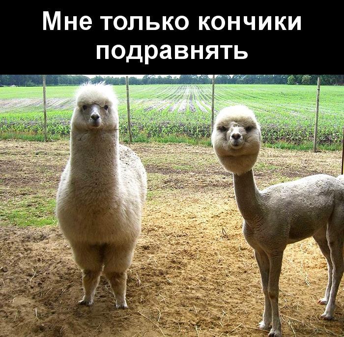 изображение: Мне только кончики подравнять #Прикол