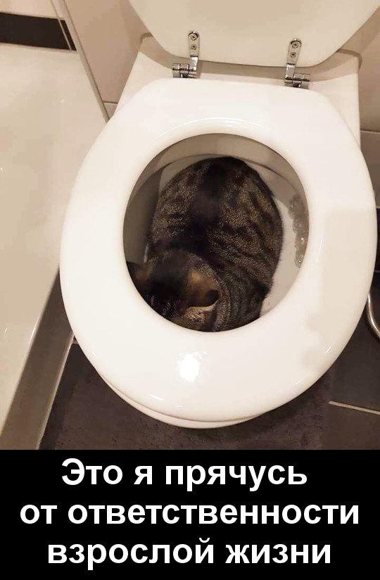 изображение: Это я прячусь от ответственности взрослой жизни #Котоматрицы