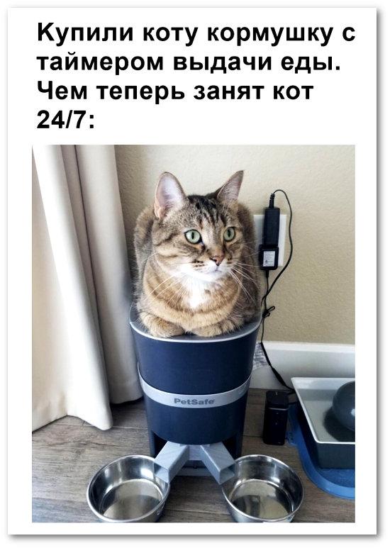 изображение: Купили коту кормушку с таймером выдачи еды. Чем теперь занят кот 24/7: #Котоматрицы