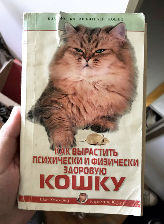 Как вырастить психически и физически здоровую кошку | #прикол