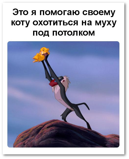 изображение: Это я помогаю своему коту охотиться на муху под потолком #Прикол