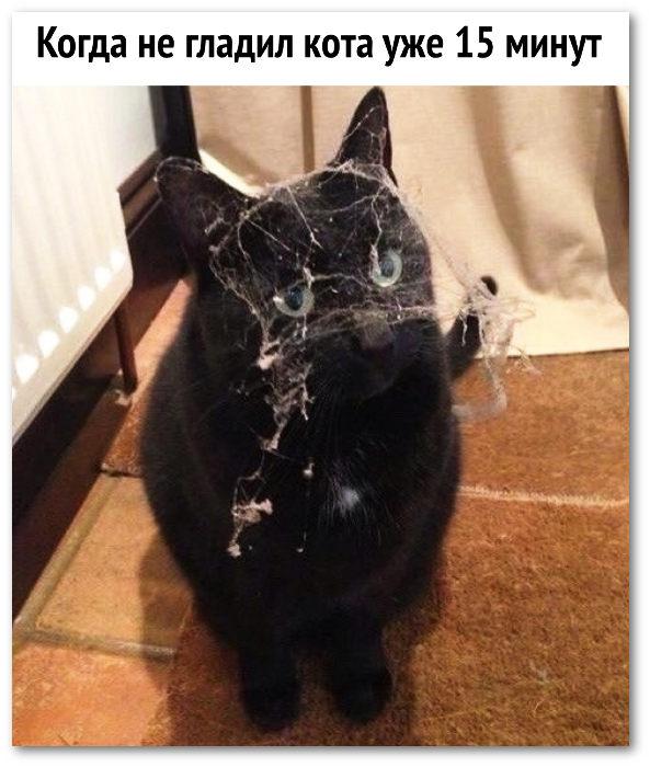 изображение: Когда не гладил кота уже 15 минут #Котоматрицы