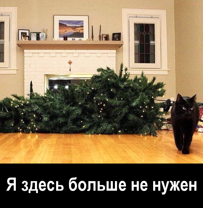 изображение: Я здесь больше не нужен #Котоматрицы