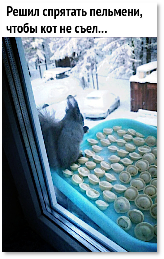 изображение: Решил спрятать пельмени, чтобы кот не съел. #Котоматрицы