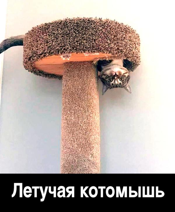 изображение: Летучая котомышь #Котоматрицы