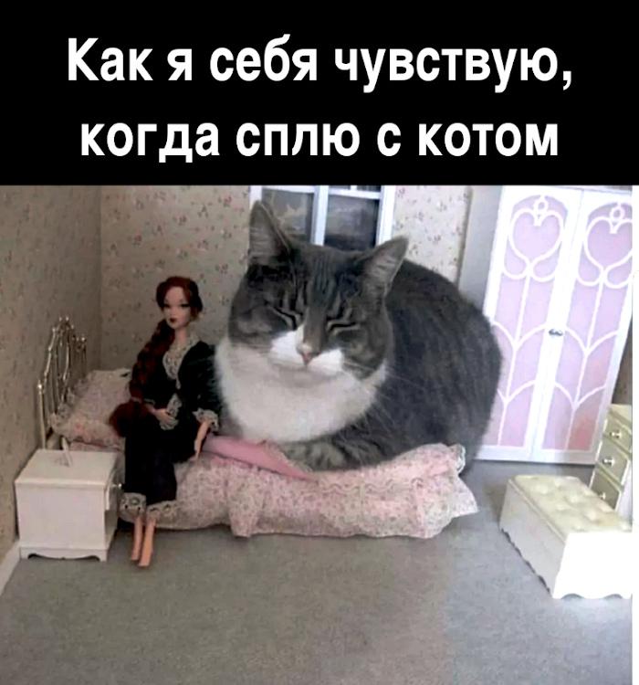 Как я себя чувствую, когда сплю с котом | #прикол