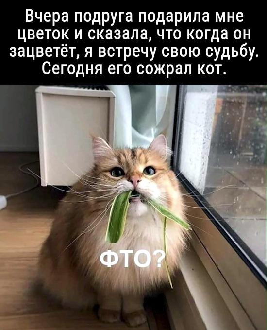 изображение: Вчера подруга подарила мне цветок и сказала, что когда он зацветёт, я встречу свою судьбу. Сегодня его сожрал кот. #Котоматрицы