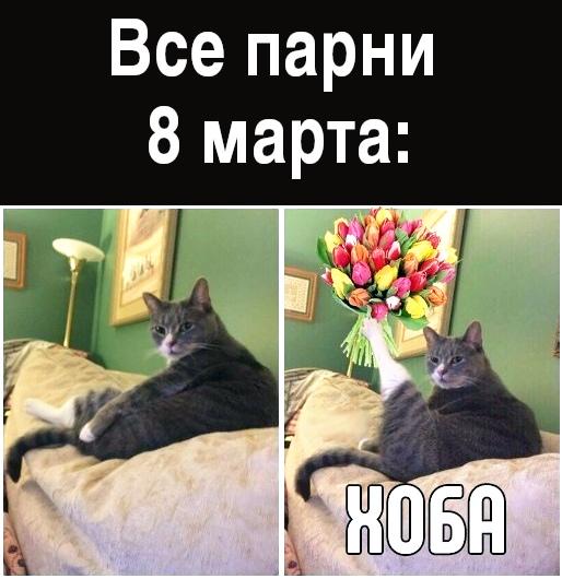 изображение: Все парни 8 марта: Хоба! #Котоматрицы