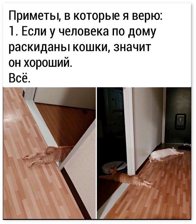 изображение: Приметы, в которые я верю: 1. Если у человека по дому раскиданы кошки, значит он хороший. 2. Всё. #Прикол