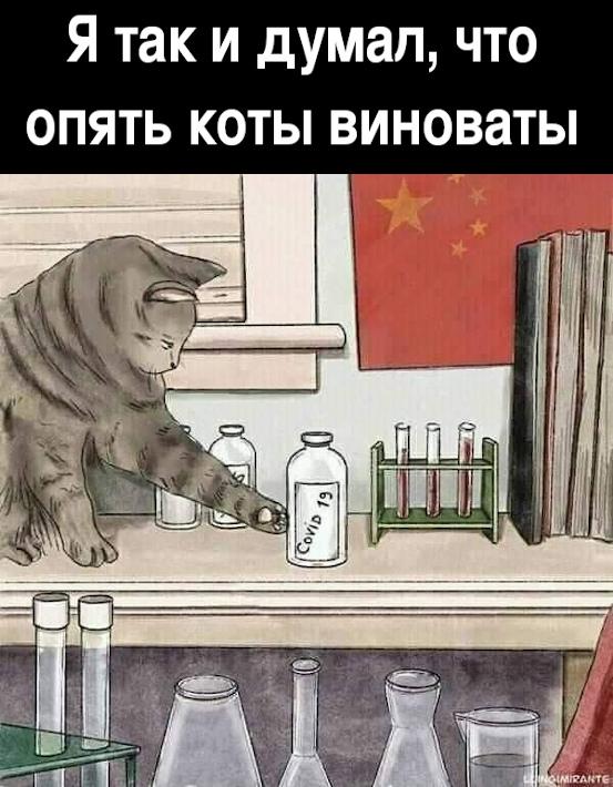 Я так и думал, что опять коты виноваты | #прикол