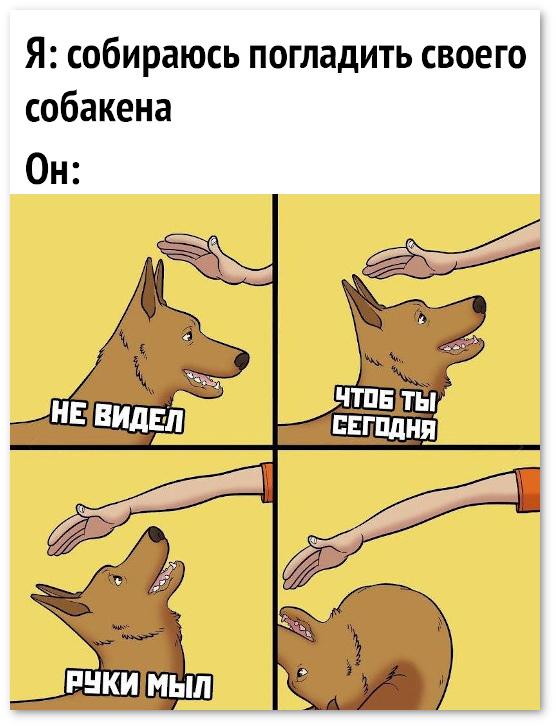 изображение: Я собираюсь погладить своего собакена. Он: Не видел, чтоб ты сегодня руки мыл. #Прикол
