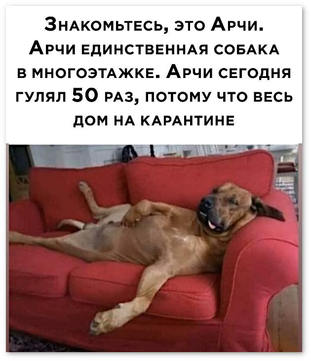 изображение: Знакомьтесь, это Арчи. Арчи - единственная собака в многоэтажке. Арчи сегодня гулял 50 раз, потому что весь дом на карантине. #Прикол