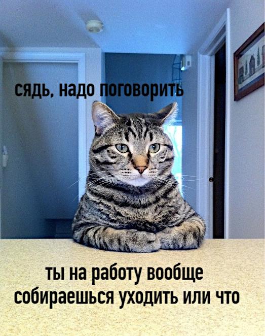 изображение: - Сядь, надо поговорить. Ты на работу вообще собираешься уходить или что? #Котоматрицы