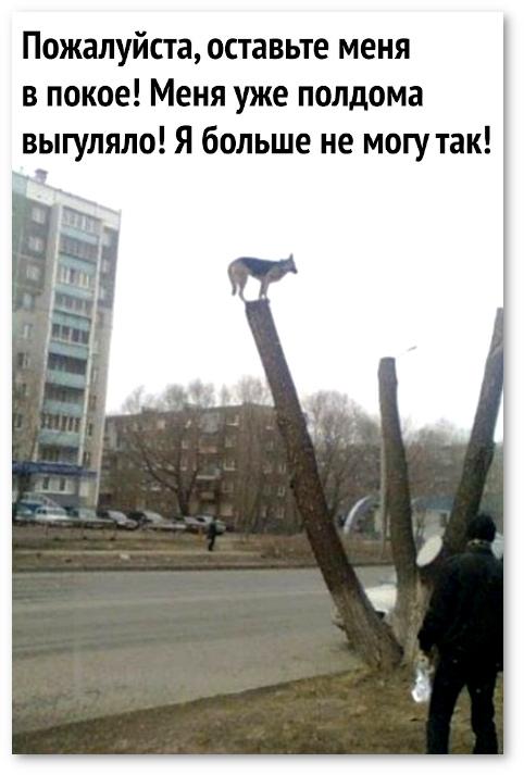 изображение: Пожалуйста, оставьте меня в покое! Меня уже полдома выгуляло! Я больше не могу так! #Прикол