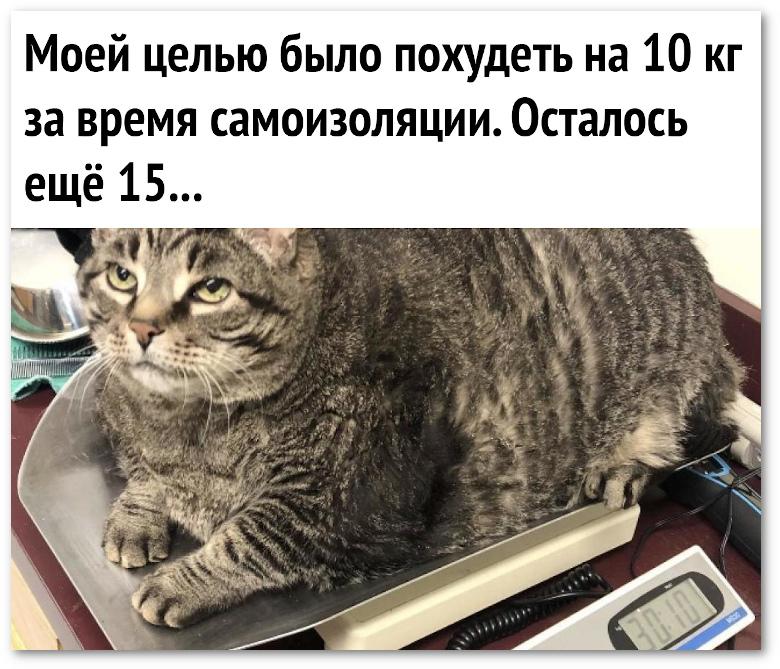 изображение: Моей целью было похудеть на 10 кг за время самоизоляции. Осталось ещё 15 ... #Прикол