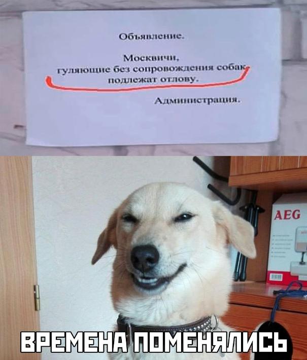 Москвичи, гуляющие без сопровождения собак, подлежат отлову. - Времена поменялись! | #прикол